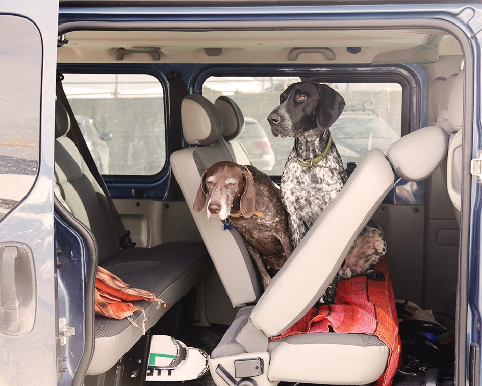 What To Give Dogs When They Get Car Sick