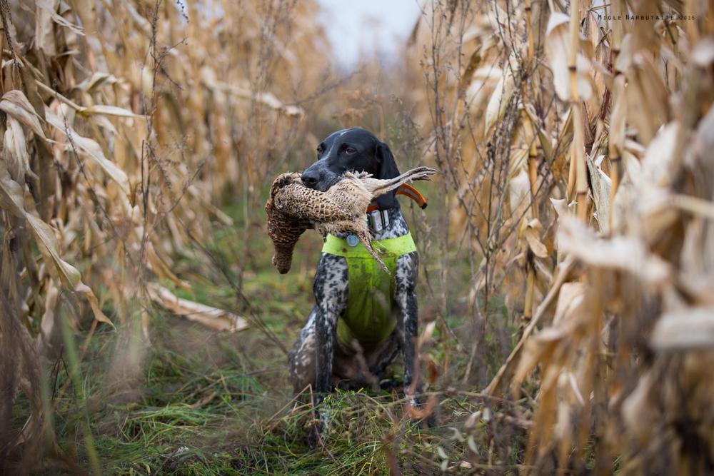 Pheasant_Hunt_2016-11GA2A9134