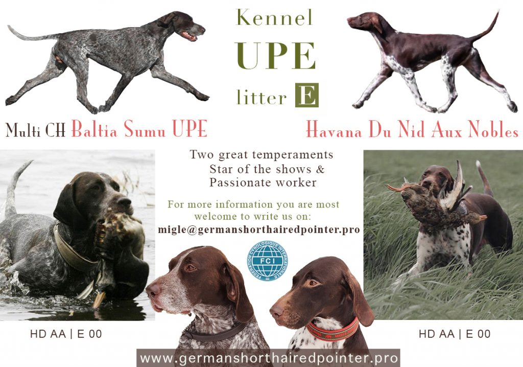 We are waiting for PUPPIES - German Shorthaired Pointer blog