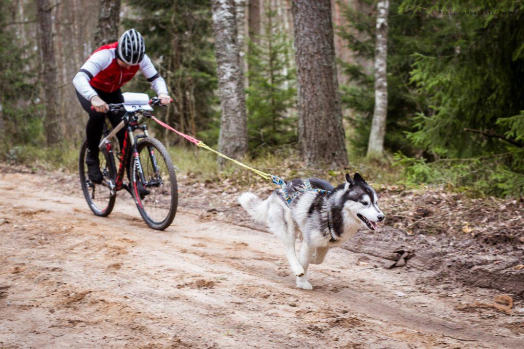 Sled_Dog_Burundukas_sm-7995