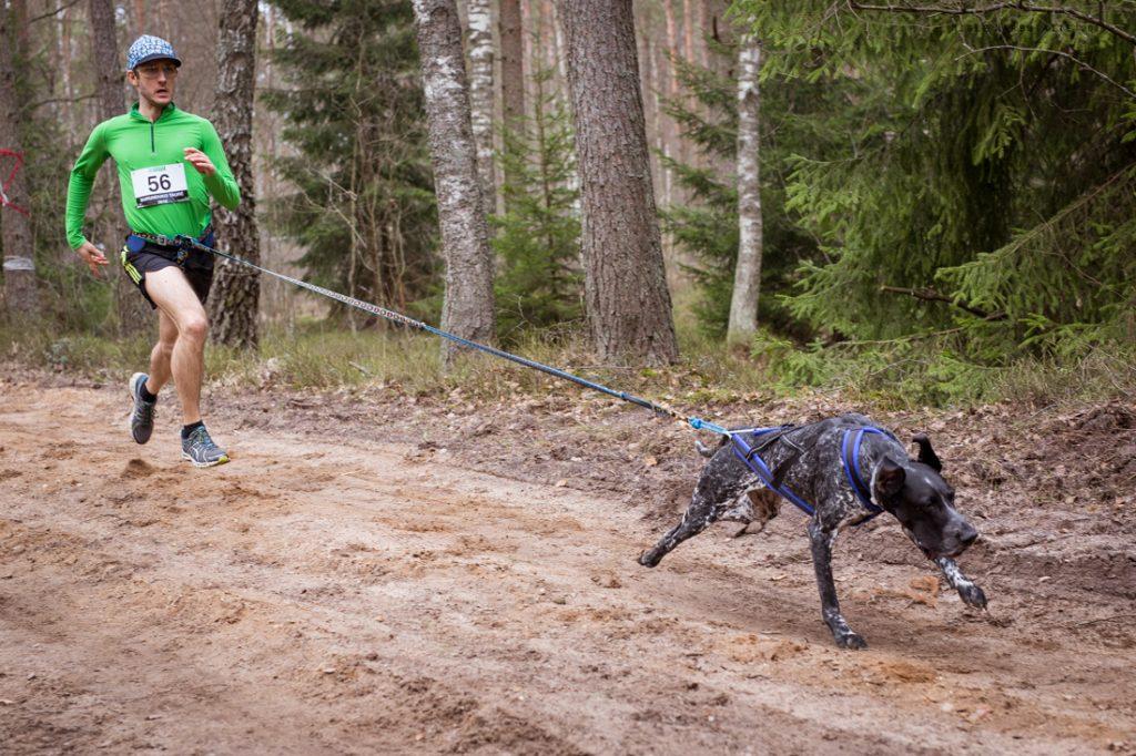 Sled_Dog_Burundukas_sm-8095