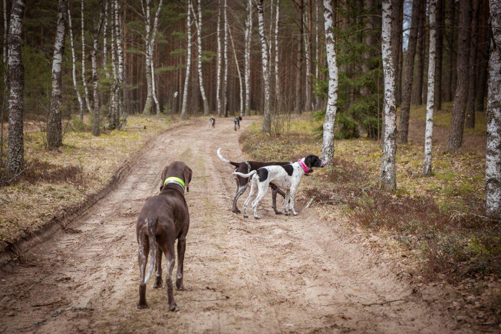 Sled_Dog_Burundukas_sm-8171