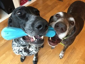 Undestroyable Dog Toys