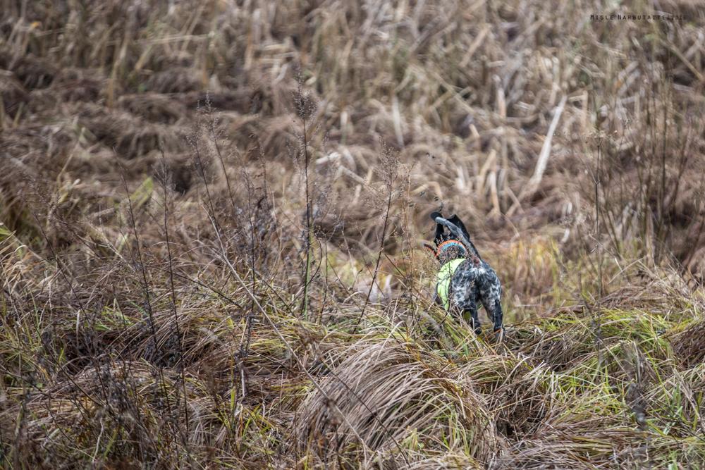 Pheasant_Hunt_2016-11GA2A9104