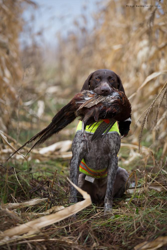 Pheasant_Hunt_2016-11GA2A9149