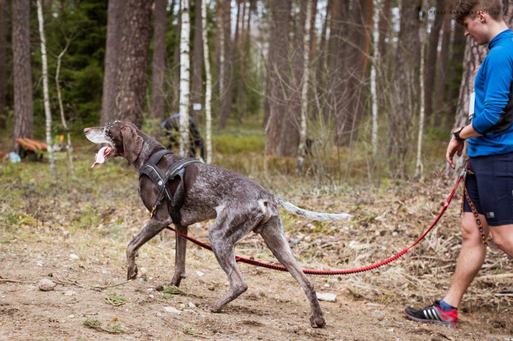 Sled_Dog_Burundukas_sm-8005