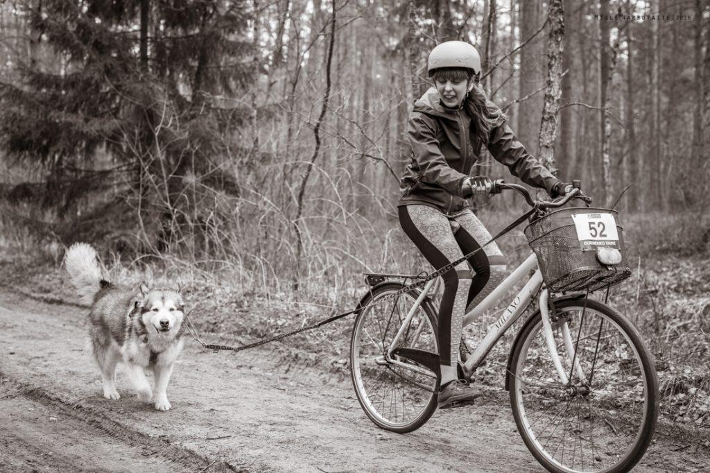 Sled_Dog_Burundukas_sm-8116