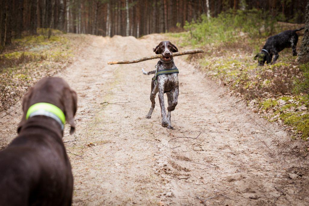 Sled_Dog_Burundukas_sm-8188